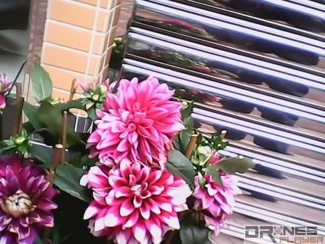 UDI RC U818A 近攝花卉的效果。