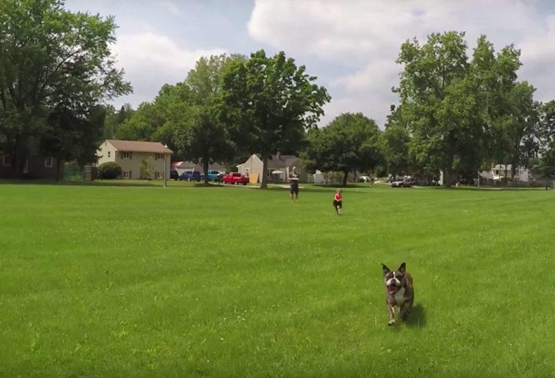 狗狗不斷朝著航拍機跑,當作玩具般追逐。