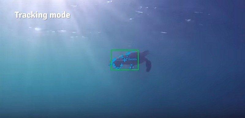 iBubble 可將追蹤對象鎖定為移動中的海洋生物如海龜等。