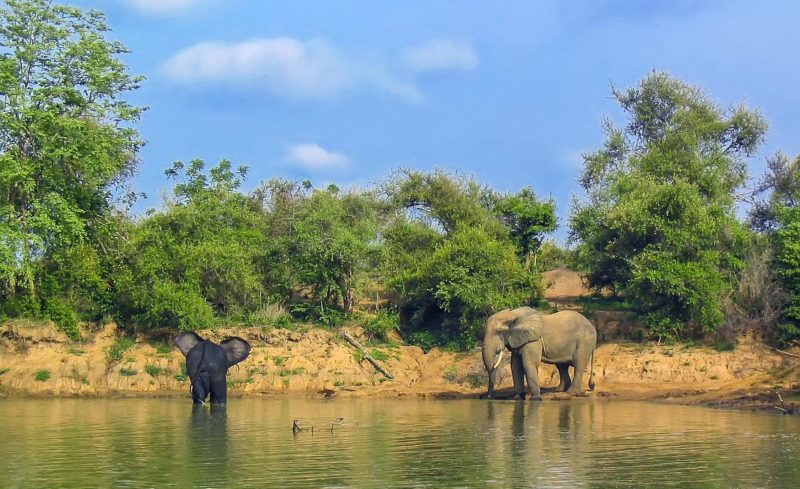 迦納是非洲西部的一個國家,西鄰象牙海岸,北靠布吉納法索,東邊是多哥,南邊為幾內亞灣。圖中為迦納北部莫爾國家公園。