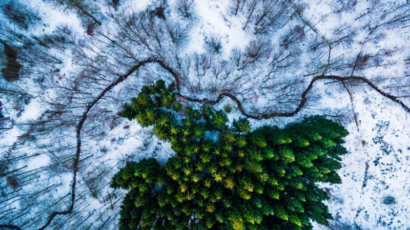 丹麥 Kalbyris Forest dronestagram