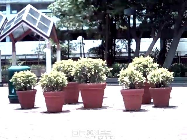 MJX X916H 因拍攝解像度不足,致使影像細緻度較弱,圖中植物的枝葉便顯得糊成一團。
