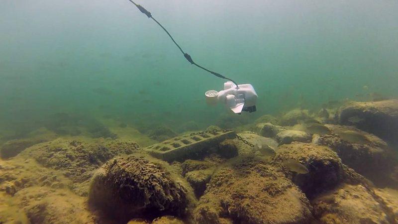 Fathom One 水中無人機在水底潛航時需連接纜線。