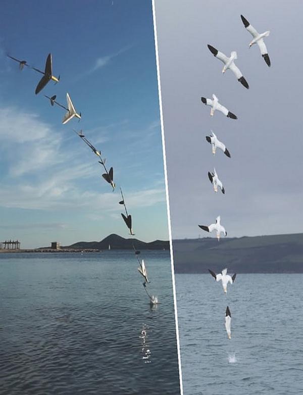 AquaMav 無人機的下水原理,構思靈感源自塘鵝捕食時的俯衝動作;至於出水運作,則模仿飛魚躍出水面的動作。