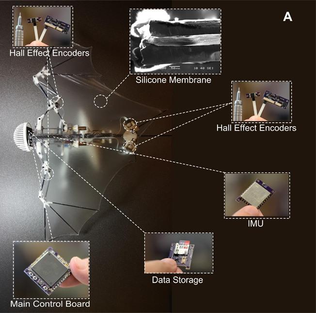 Bat Bot 結構(圖片來源:Soon-Jo Chung 論文)