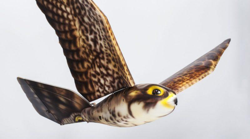 模仿獵鷹造型的 Robird 無人機,尺寸跟真實獵鷹相若,專責在機場跑道範圍驅趕鳥類。