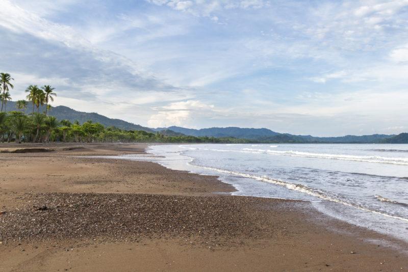 欖蠵龜會到哥斯達黎加海灘產卵。