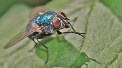 昆蟲複眼透過感應動態增強視力