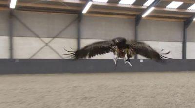 倫敦都市警部(MET)考慮採用獵鷹捕捉無人機