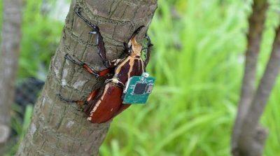 甲蟲生化無人機