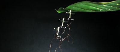 RoboBee 微型無人機
