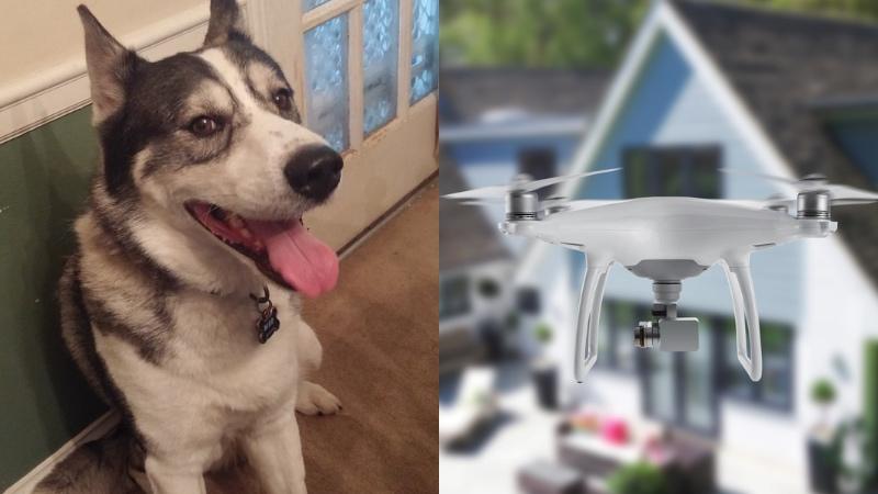 空拍機 騷擾 狗隻