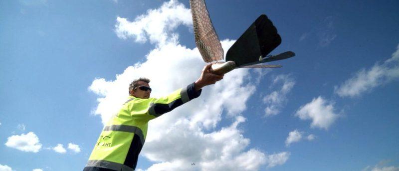 Robird 鷹形無人機拯救機場乘客