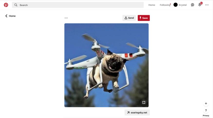 Drone & Dog
