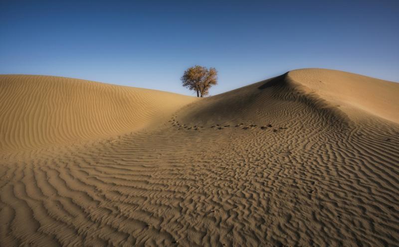 Xinjiang Taklimakan Desert