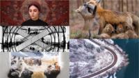 索尼世界攝影大獎 1 月截止報名 參選作品不乏航拍照片