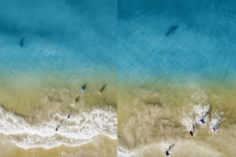 真嚇人! 航拍畫面驚見鯊魚遊向岸邊 美漢及時叫子女上水