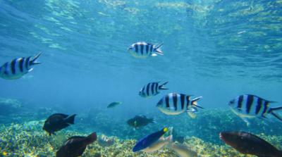 概念無人機外形、動作仿魷魚扇貝 主要用於軍事用途