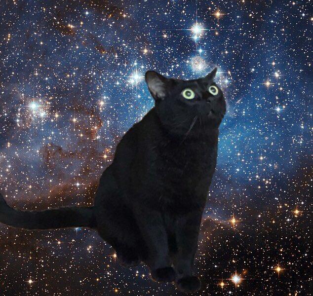 【圖片故事】喵星人首遇航拍機之表情 想說「我到底看了三小」