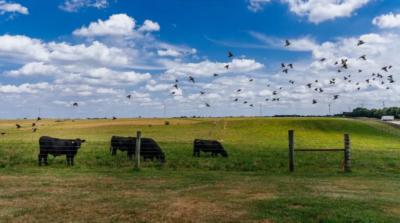 無人機監視牛隻生命體徵 正式啟用前先有「壓力測試」
