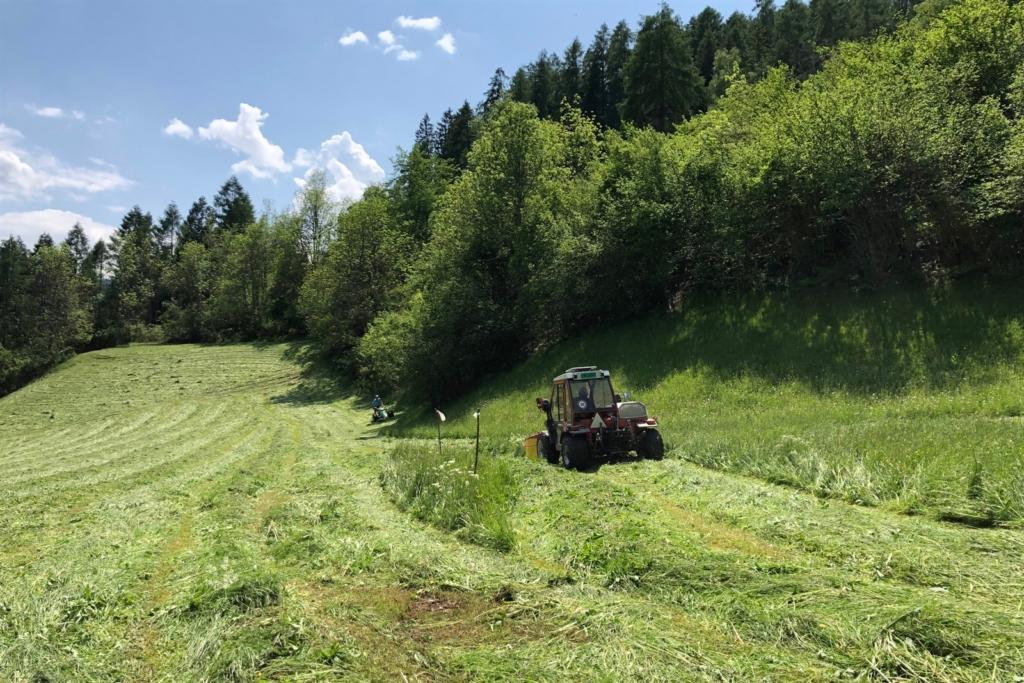 無人機瑞士空中尋蹤 450 初生鹿逃出收割機殺身之禍