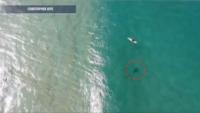 鯊魚游向衝浪客 澳男用無人機揚聲系統喊:馬上撤離