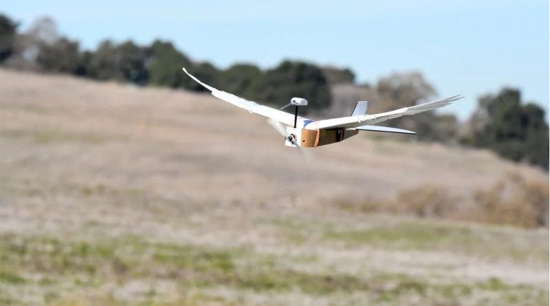 無人機長出真羽毛翅膀 仿鳥結構能省飛機燃油消耗?