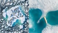 航拍極地野生動物 法國攝影師屢獲獎項 寄語保持道德規範及守法