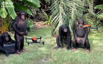 真正的《猩球崛起》? 黑猩猩操控無人機影片吸 350 萬人次觀看