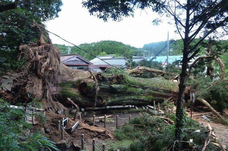 航拍看日本暴雨災情:日本岐阜縣千年神木倒塌 熊本展開災區清理