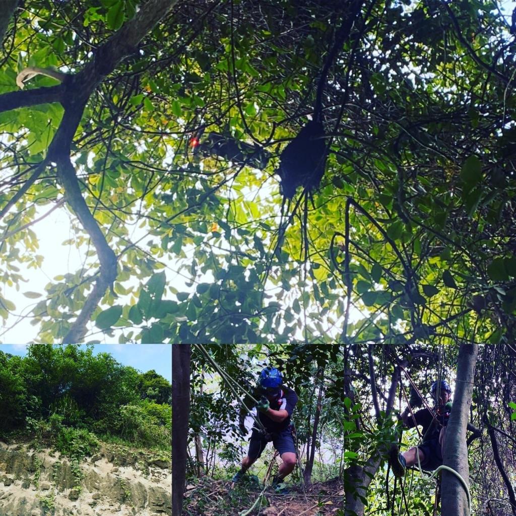專訪空拍機救援隊:大多數掛樹和掉山區 摔機最多選手是它!